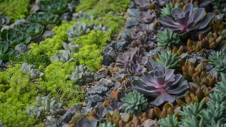 Best Conditions for Succulents to Grow