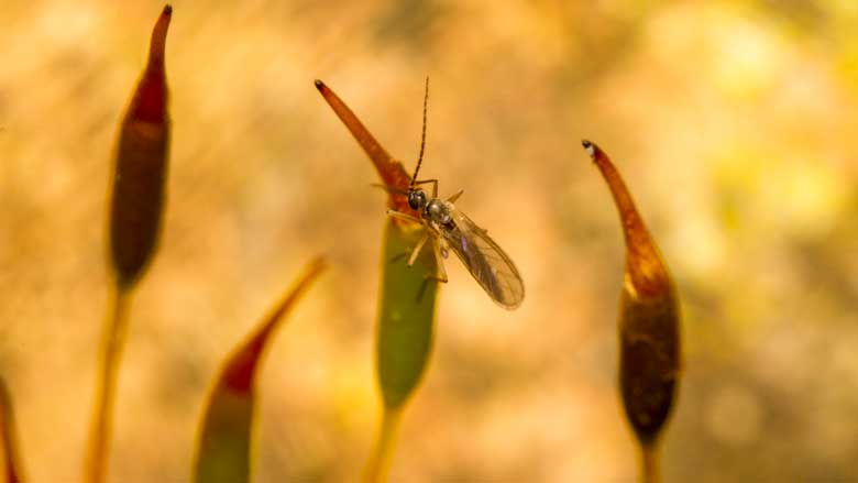 How To Get Rid of Fungus Gnats on Succulents