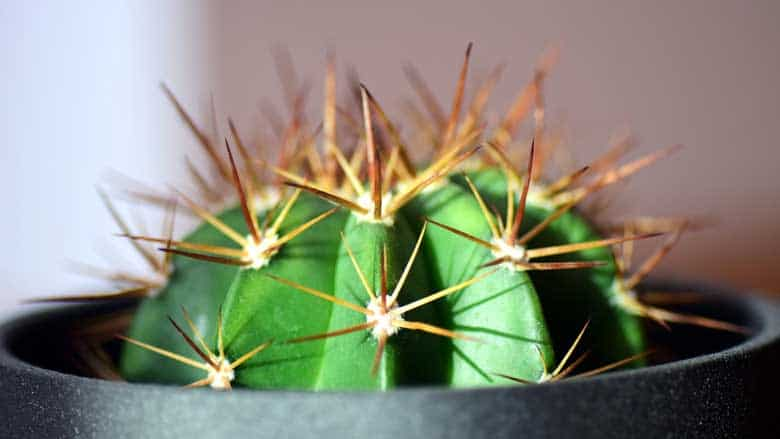 How Much Sun Does a Cactus Need?