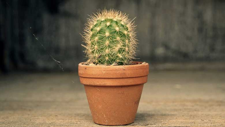 How Often Should You Water a Cactus