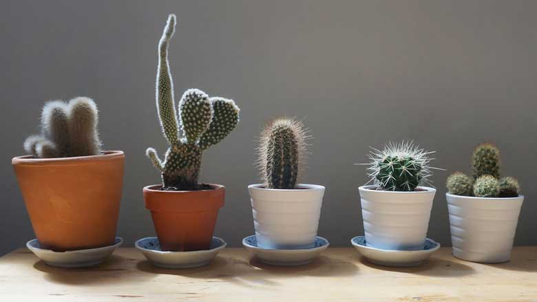 How To Take Care of Small Cactus Plants (Mini Cactus Care Guide)