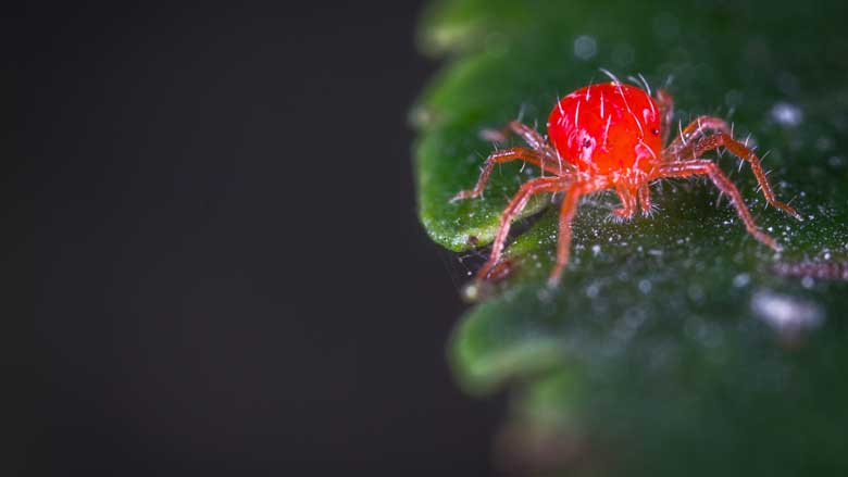 How To Get Rid of Spider Mites on Cactus Plants