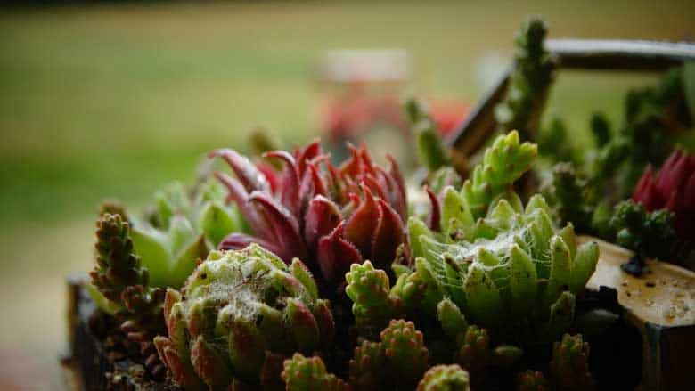 How To Get Rid of Spider Mites on Succulents