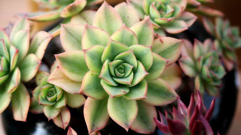 How To Tell if Your Succulent Needs Water