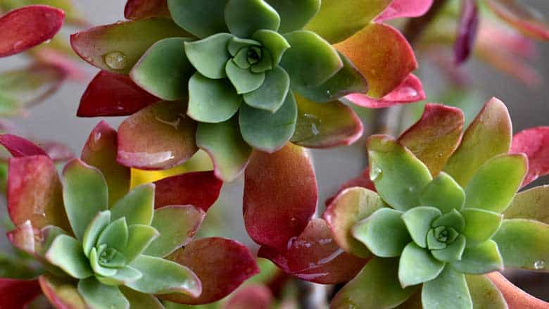 How Often Should You Water a Succulent Plant